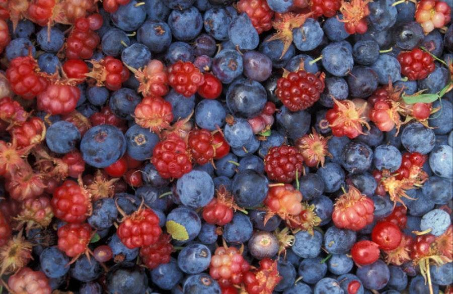 Eating Berries Linked To Lower Parkinson's Risk in Men